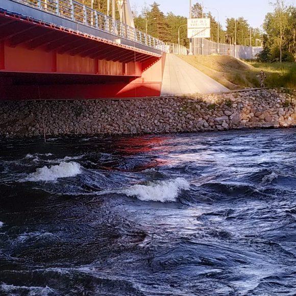 Лосево. Уровень воды 22 июня — 28 июня.